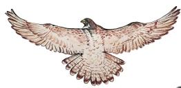 falcon back